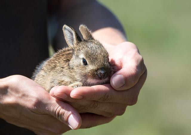 Malý zajac v rukách.jpg